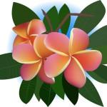 Plumeria-Illustration